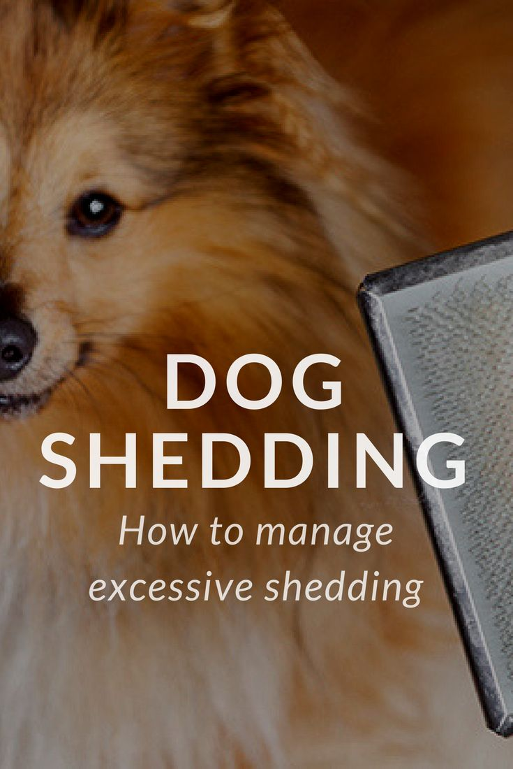 Best 25 Dog Shedding Ideas On Pinterest Appreciate Your