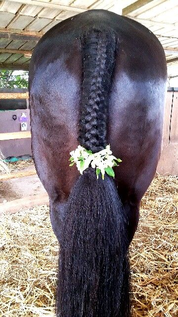 Horse tail flower braid