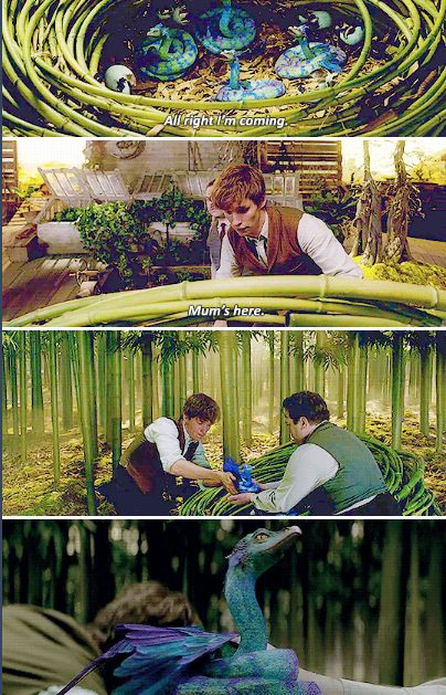 Fantastic Beasts - Babies Occamy Newt, delighted by Jacob's interest in his creatures, takes back the baby Occamy, placing it in the nest.