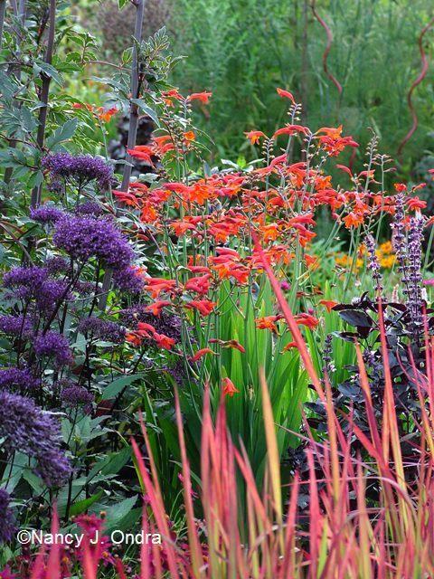 Crocosmia-Lucifer:  Companion to daffodils.   // Great Gardens & Ideas //