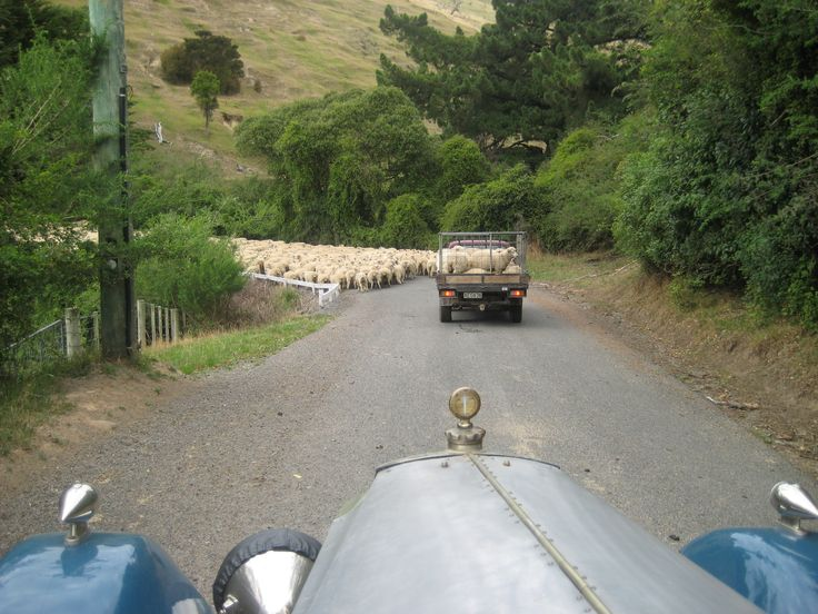 Herding sheep - Banks Peninsula, NZ