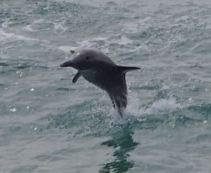 Swimming with dolphins in Rockingham, Australia