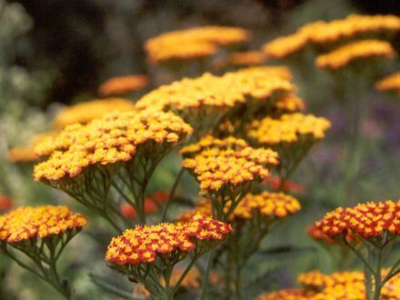 Here are some of the best plants to grow in your garden which are easy to take care of and can stand hot weather!