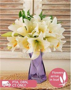Flowers: St Joseph Lilies in a Purple Vase!