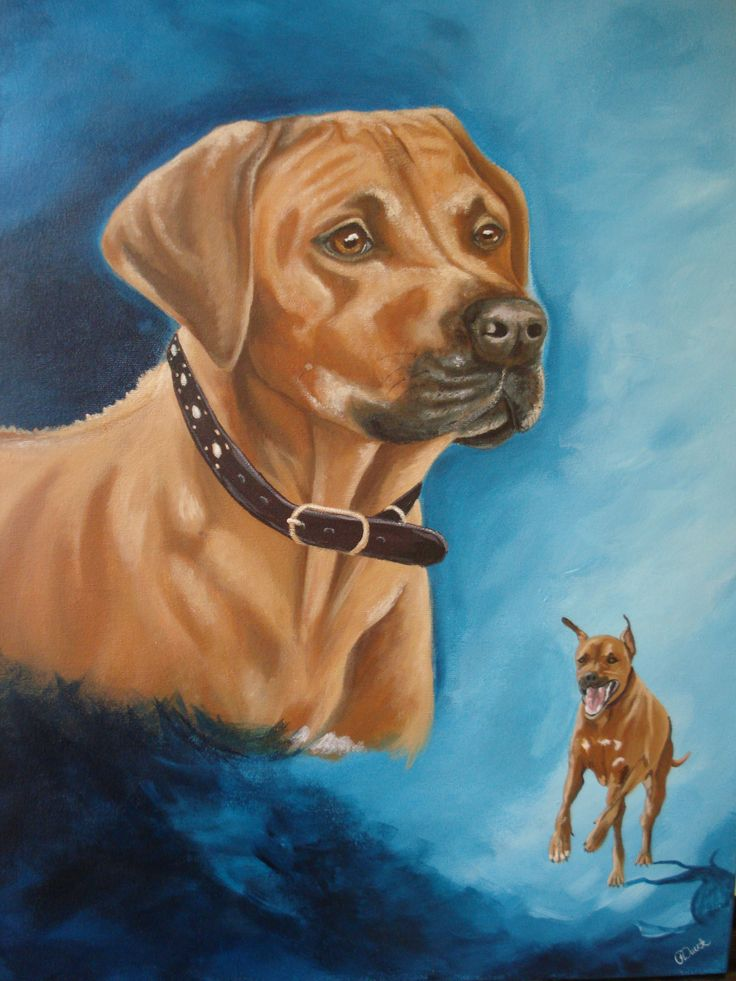 "SOLD ""Axel"" - Rhodesian Ridgeback. 16"" x 20"" acrylic. Happily living in Walnut Creek, California. Commission painted by Pauline Dueck #dogportraits"