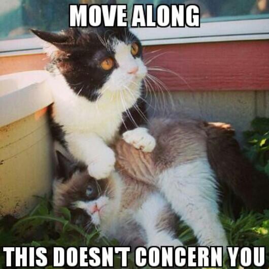 352bcdc6d1fa0a5a58949f05c71df4b5 cat stuff funny stuff 407 best grumpy cat images on pinterest grumpy kitty, grumpy cat,Cat Boss Meme
