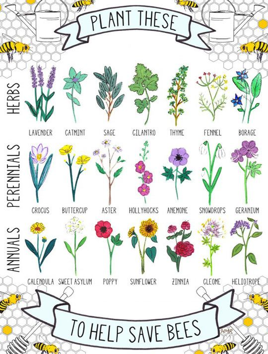 Bees, which sustain so much of our critical vegetable life, are in real trouble.  Studies point toward overuse of pesticides so far.  Please plant no-pesticide flowers for your bee friends to survive on!