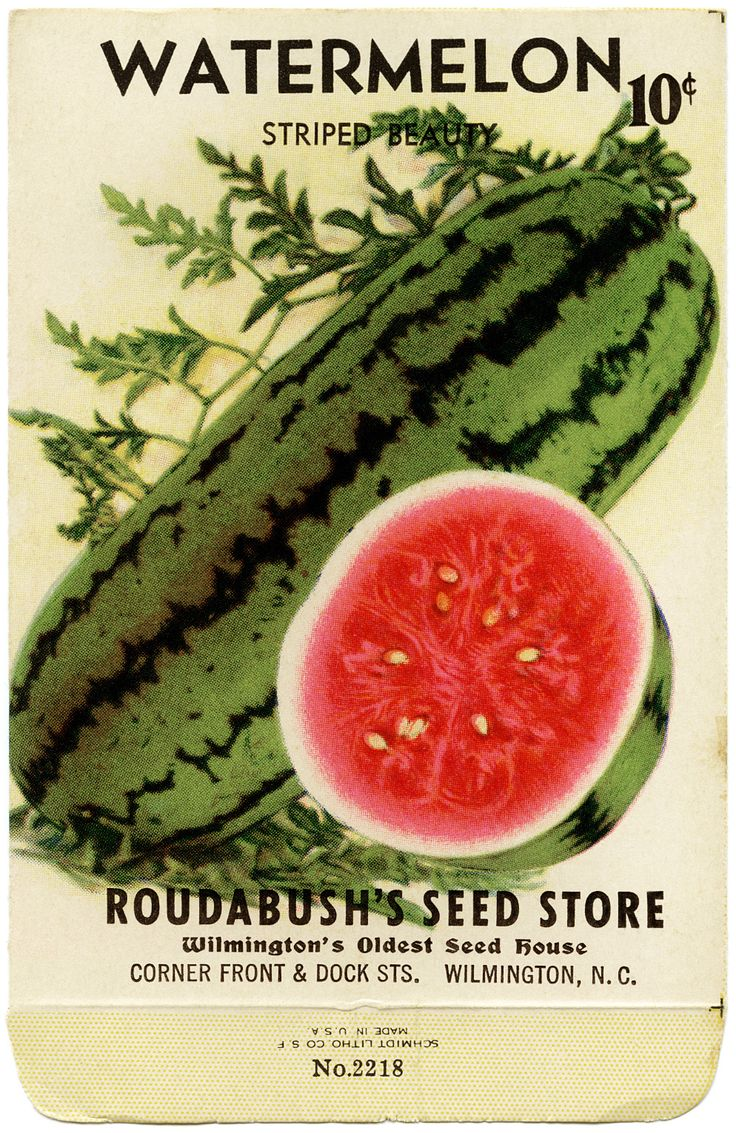 Pictures of Old Seed Packets | FREE Vintage Image ~ Watermelon Seed Packet | Old Design Shop Blog