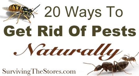 20 Ways To Get Rid Of Pests Without Harsh Chemicals - ants, spiders, fruit flies, mosquitos, bugs in the garden, wasps, & more!: Get Rid Of Bugs In Gardens, In Gardens Ants, Ants Inside, Flys, Ants Repel, Fruit Flying, Bugsbgon, Spiders Idea, Ants Rid