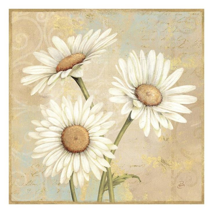 Beautiful Daisies I UMĚNÍ NA AKRYLU by Daphne Brissonnet at Art.com