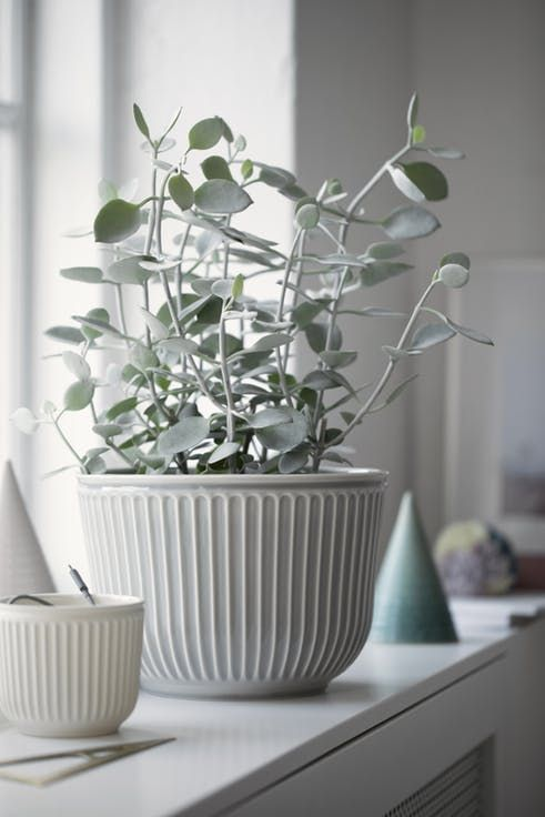 A white vase for your green plants. The vase is from the Danish design brand Kähler.