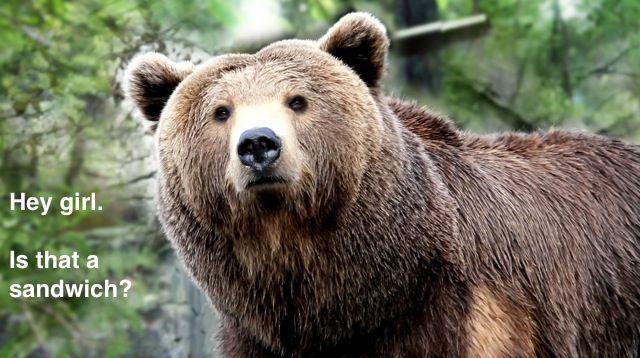 Bear spies a Food Carrier.