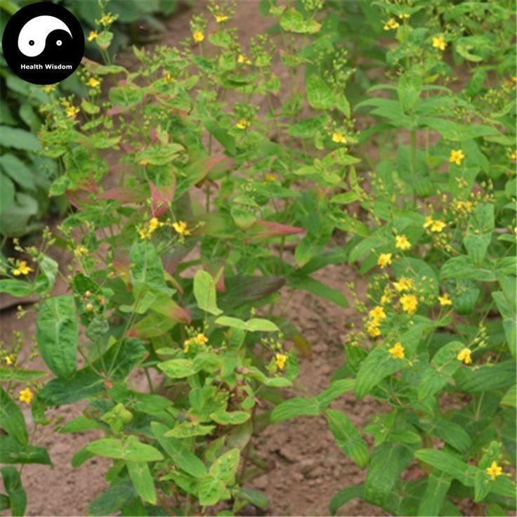Buy Chinese Hypericum Perforatum Seeds Plant Medicinal Herbal Saint John's Wort