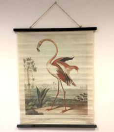 Schoolposter - flamingo | Posters & wandkaarten | kabinett