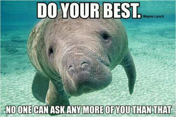 Motivational manatee | Manatee | Pinterest | Manatees