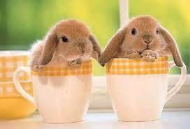 Töltse a húsvétot Veszprémben az Oliva hotelben. Húsvéti hosszú hétvége csomag. Részletek a honlapon.  http://oliva.hu/tartalom/2015-03-06/husveti-csomag