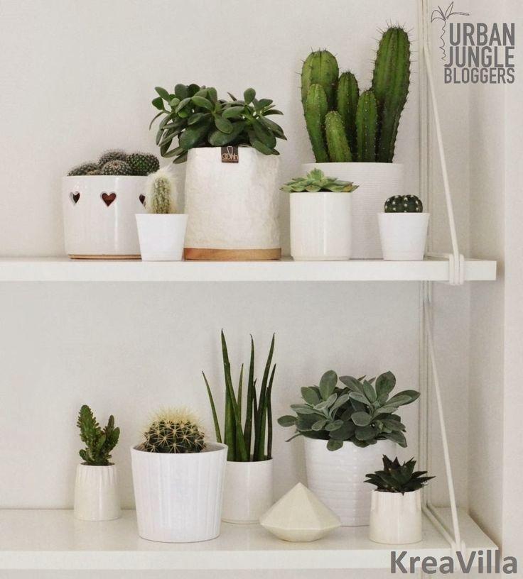 One plant - three stylings. Via Kreavilla. barefootstyling.com