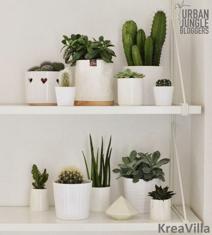 One plant - three stylings. Via Kreavilla. barefootstyling.com