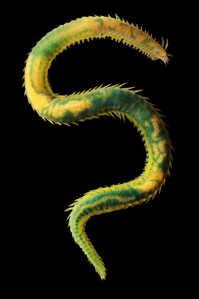 Weird Sea Creature. © Alexander Semenov.