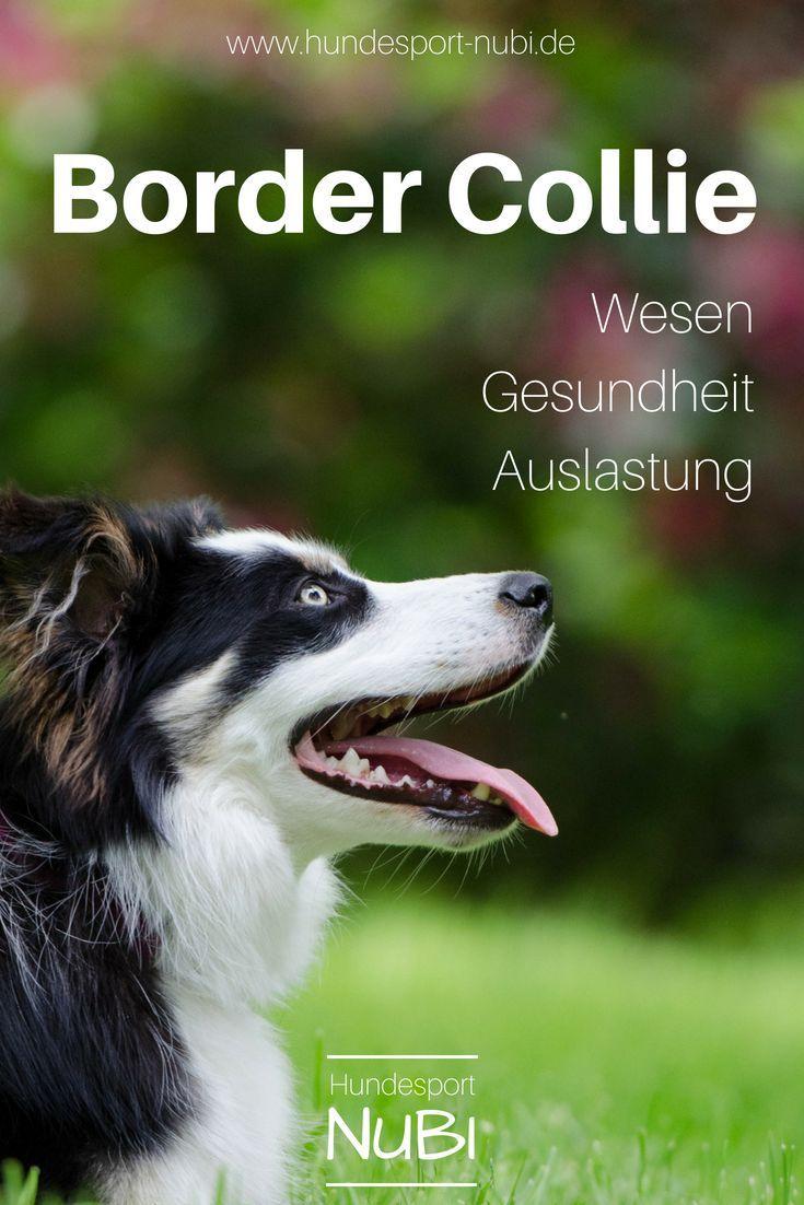 Border Collie Sportlicher Hutehund Hunderassen Lexikon Hunderassen Hunde Rassen Hunde