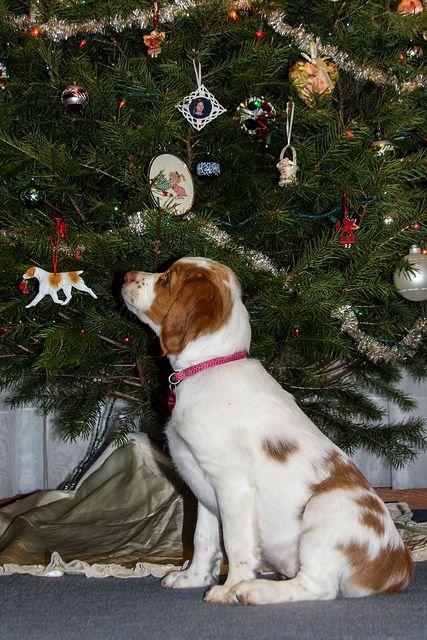 O Christmas Tree by rlgidbiz1, via Flickr