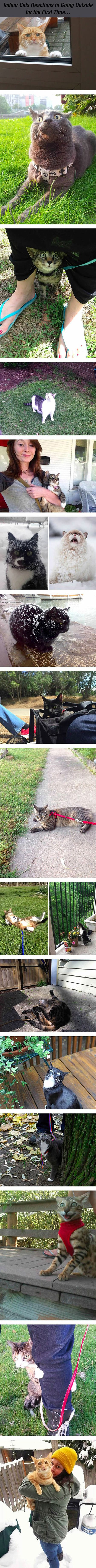 Photographers capture the reactions of indoor cats going outside for the first time.