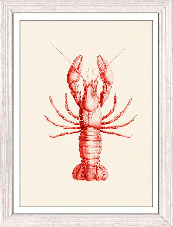 Red Lobster sea life print-Modern beach art - Red lobster chic kitchen wall decor via Etsy