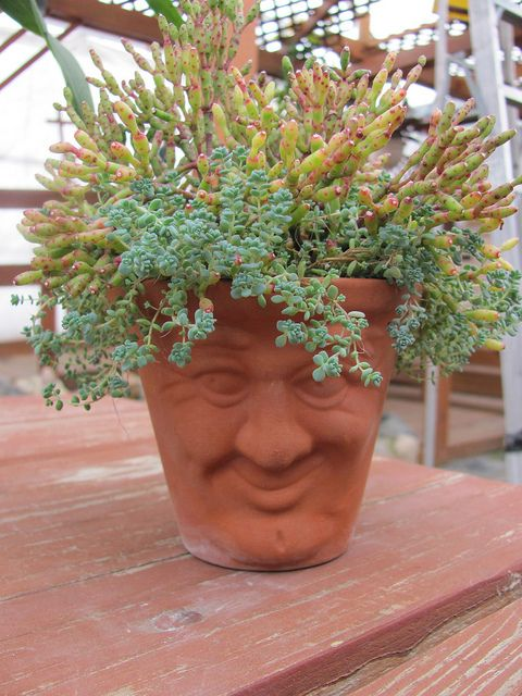 'Smiley' Succulent Pot. Every garden needs some whimsy! <3 this!