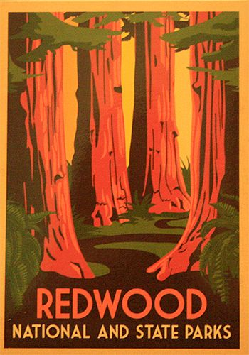 Redwood National Park - Western National Parks Road Trip including Redwoods…
