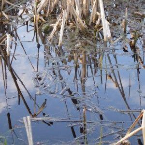 Blue Sky Reflection in the Pond! Natasha Marshall Blog