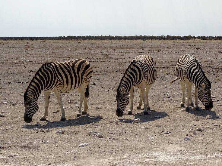 Etosha National Park, Namibia. Photo: Felix