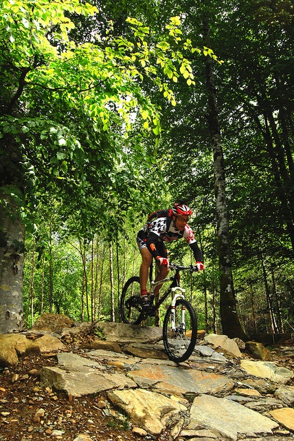 Mountain Bike Coed-y-Brenin, Wales. 'For experienced riders, the most notorious route is the most tempting: the menacingly named Beast of Brenin, an adrenalin-pumping, mentally taxing challenge that takes around 4 hours.