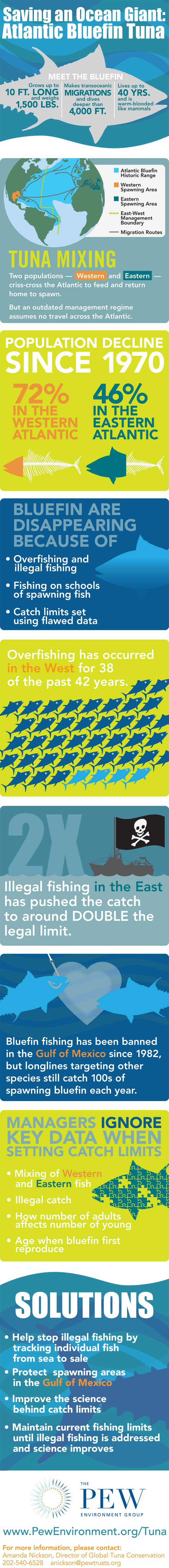 Atlantic Bluefin tuna infographic from Pew #Infographic #ICCAT