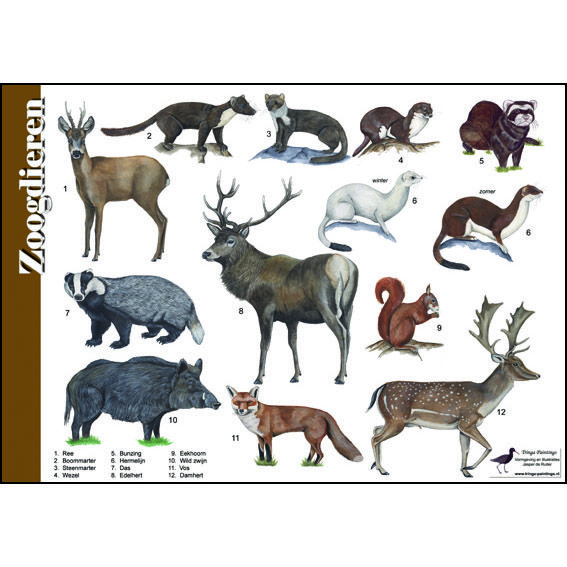 Herkenningskaart-Zoogdieren-951021.jpg (567×567)