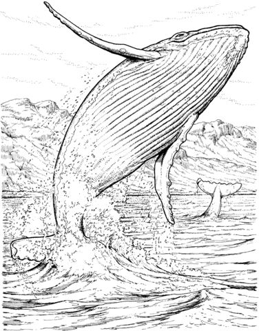 13 best marine animals images on Pinterest   Printable coloring ...