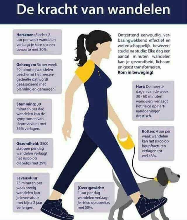 De kracht van wandelen