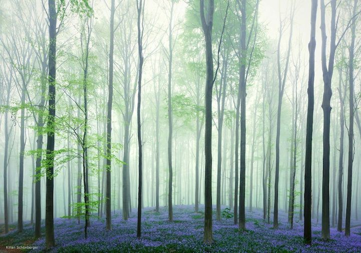 Breathtaking Photos of the Blue Forest in Belgium - My Modern Met
