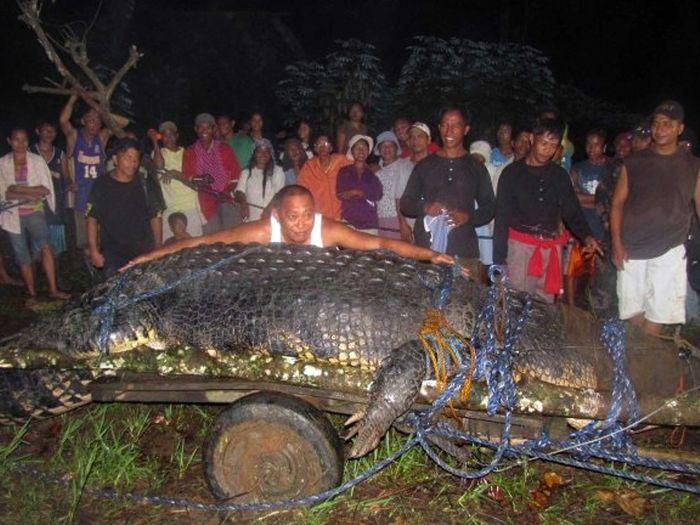 """Morre """"maior crocodilo de água salgada em cativeiro no mundo"""" - Bichos - R7"""