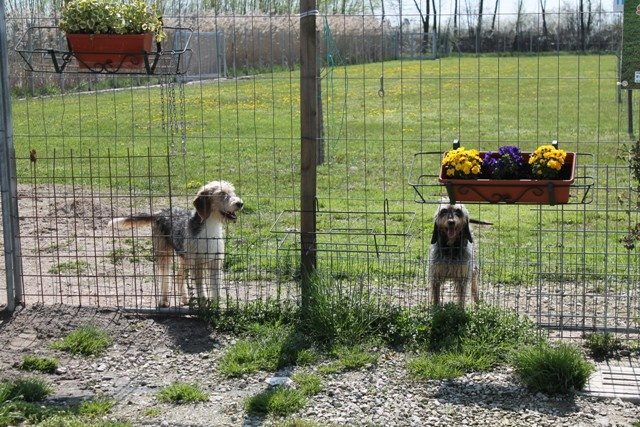 Howie and Heidi posing near the posies! / Howie e Heidi in posa vicino ai fiori!