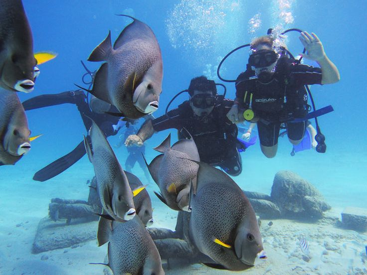 Scuba diving tours in Cancun, Cozumel, cenotes, etc. Diving packages