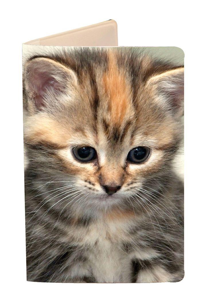 Söt kattunge håller ordning på ditt busskort.