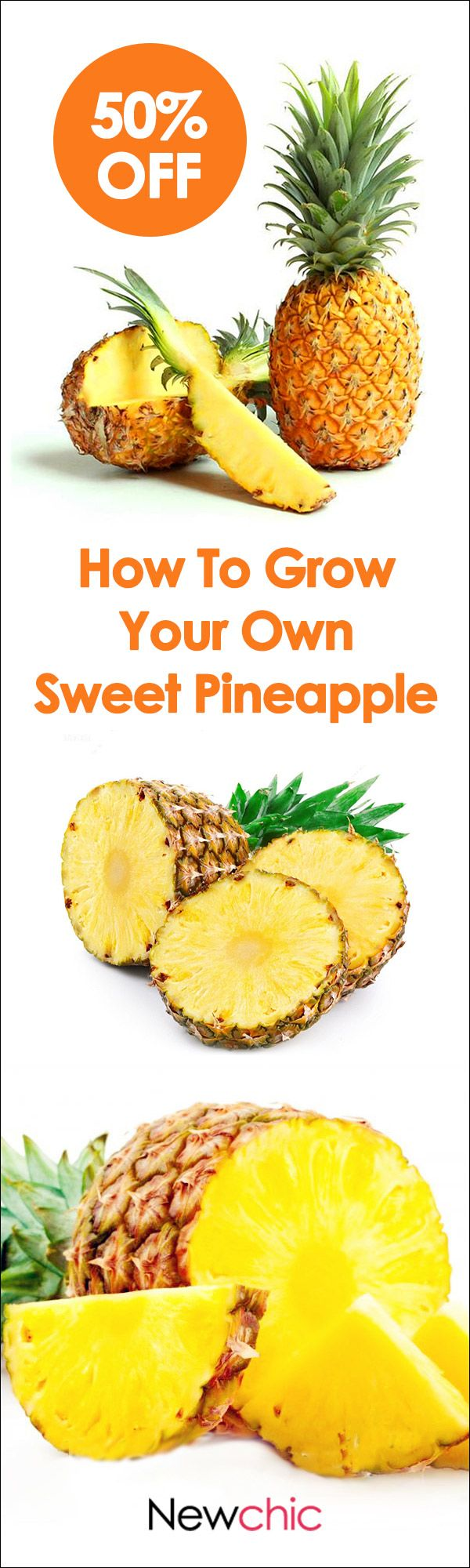 What to grow in your garden? -- Egrow 100PCS Sweet Pineapple Seeds Home Garden Potted Delicious Edible Fruit Seed Bonsai Plants #newchic#garden#spring#seed#fruit#green