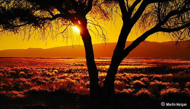 Golden African Desert Sunset (Namibia) by Martin_Heigan, via Flickr