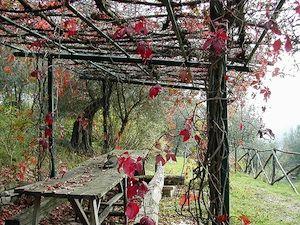 ... avec des vignes à raisin rustiques ou bien des Hydrangea petiolaris...