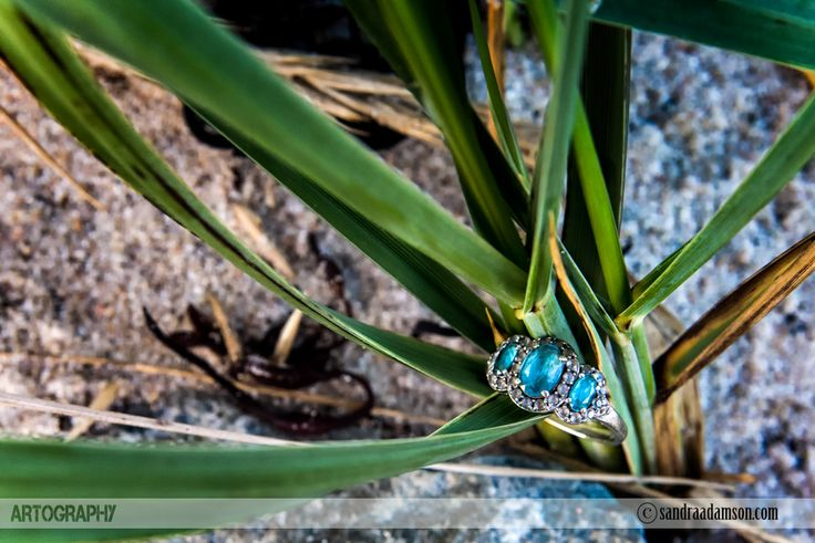 Are you looking for a creative and artistic wedding photographer? Servicing Halifax NS and the surrounding Maritime provinces. Available for international travel. Visit my website at www.sandraadamson.com  #wedding #photographer #photography #halifax #ns #novascotia #sandraadamson #photo #image #engagement #engaged #love #ring