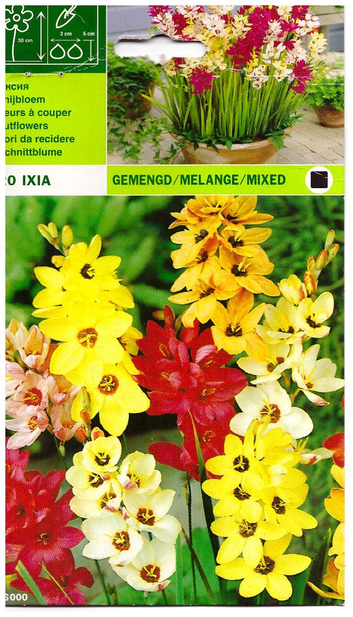 Иксия Ixia (Korenlelie) Plants, Garden