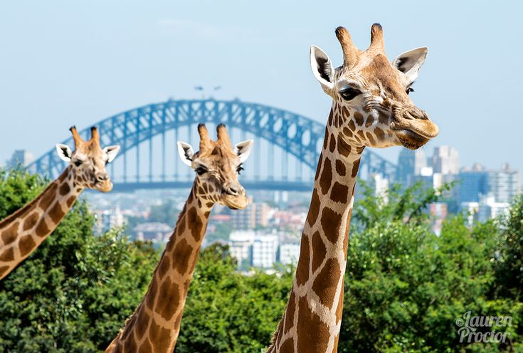 All together now... Say Cheese! at Taronga Zoo - Lauren Proctor Photography
