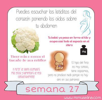 BebeBlog by mimuselina: Semana 27 embarazo. Tamaño y evolución del bebé @m...