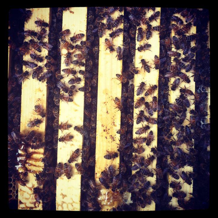 Beekeeping in Edmonton helps honeybee populations, by Vivian Binnema | The Local Good | A Warre type hive. Photo by Dustin Bajer.