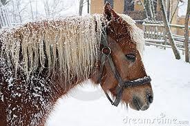 Paard in de sneeuw